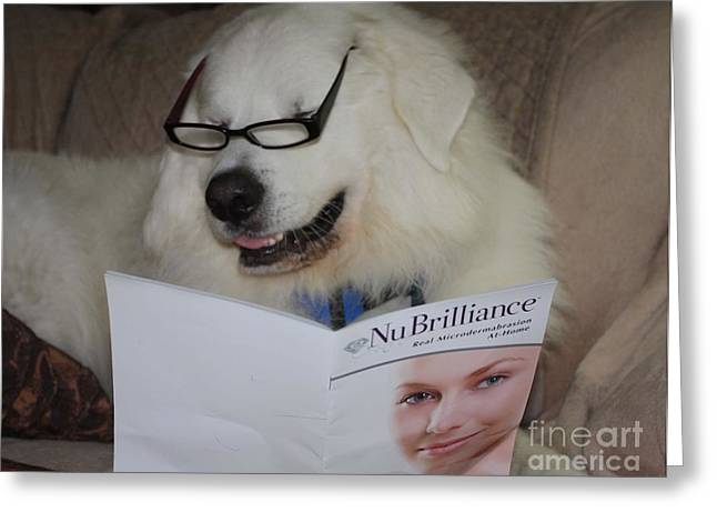 Dog On Couch Greeting Cards - Great Pyrnesse Very Busy Reading Greeting Card by John Telfer