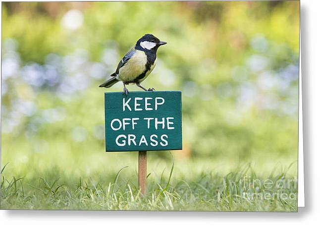 Passerine Greeting Cards - Great Tit on a Keep Off The Grass Sign Greeting Card by Tim Gainey
