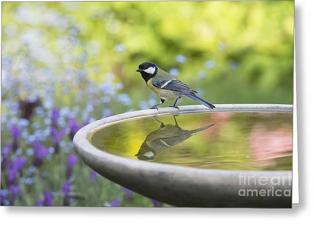 Birdbath Greeting Cards - Great Tit Reflection  Greeting Card by Tim Gainey