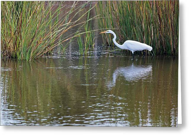 Marsh Scene Greeting Cards - Great White Egret II Greeting Card by Suzanne Gaff