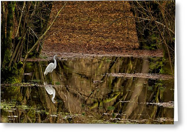 Strut Photographs Greeting Cards - Great White Egret in the Orchard Greeting Card by Belinda Greb