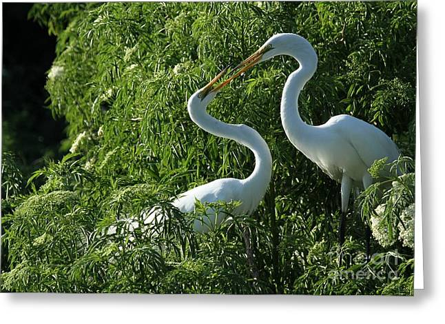 Egret Greeting Cards - Great White Egret Lovers Greeting Card by Sabrina L Ryan