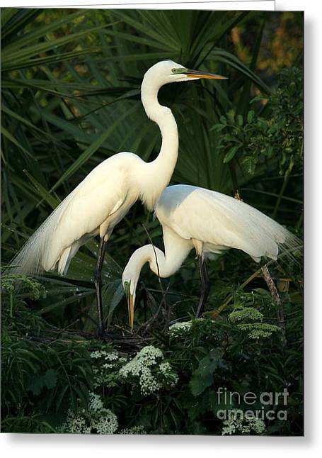 Great White Egret Greeting Cards - Great White Egret Mates Greeting Card by Sabrina L Ryan