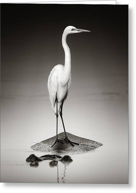 Hippos Greeting Cards - Great white egret on Hippo Greeting Card by Johan Swanepoel