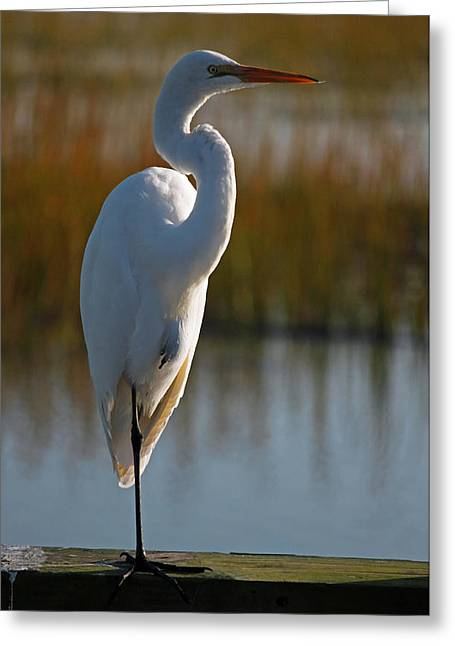 Marsh Scene Greeting Cards - Great White Egret Portrait II Greeting Card by Suzanne Gaff