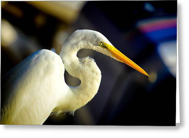 Beady Eyes Greeting Cards - Great White Egret Profile Greeting Card by Pamela Blizzard