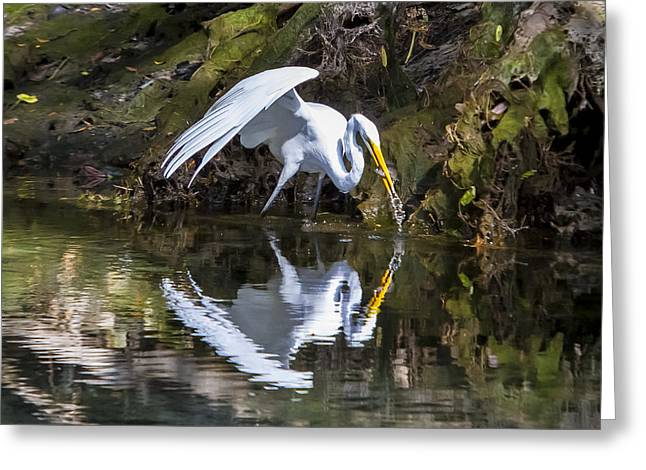 Great White Heron Fishing Greeting Card by Charles Warren