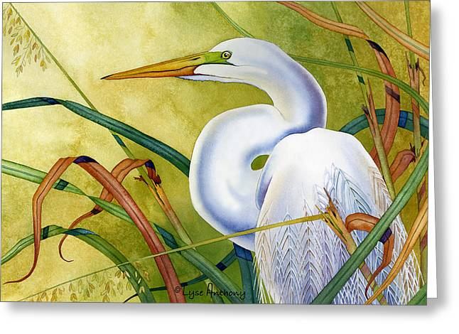 Egret Greeting Cards - Great White Heron Greeting Card by Lyse Anthony