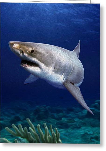 White Shark Mixed Media Greeting Cards - Great White Greeting Card by Jonathan W Brown
