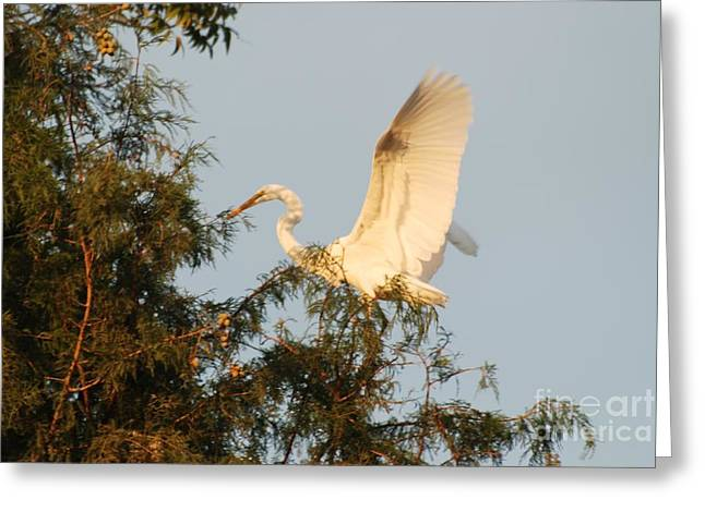 Great Neck Long Island Greeting Cards - Great White Landing Greeting Card by GD Rankin