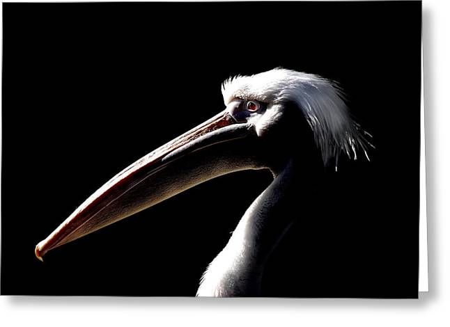 Pelican Greeting Cards - Great White Pelican Greeting Card by Mark Rogan