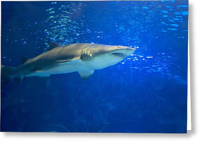 White Shark Greeting Cards - Great White Shark Greeting Card by Chris Flees