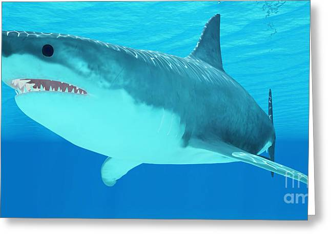 White Shark Greeting Cards - Great White Shark Close-up Greeting Card by Corey Ford