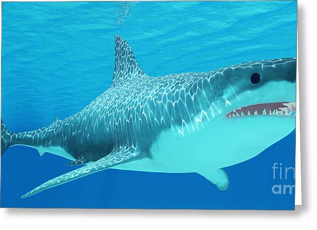 White Shark Greeting Cards - Great White Shark Undersea Greeting Card by Corey Ford