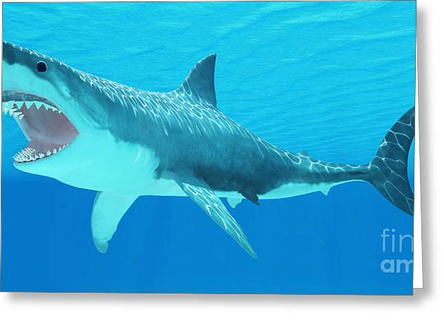 Big Teeth Greeting Cards - Great White Shark Underwater Greeting Card by Corey Ford