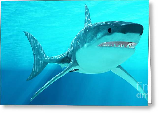 White Shark Greeting Cards - Great White Shark with Sunrays Greeting Card by Corey Ford