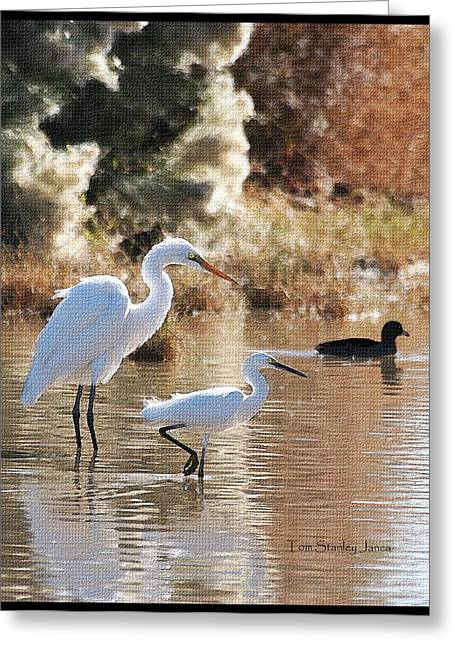 Lessor Greeting Cards - Greater And Lessor Egrets Greeting Card by Tom Janca