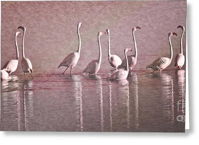 Zoologic Greeting Cards - Greater Flamingos Greeting Card by Heiko Koehrer-Wagner