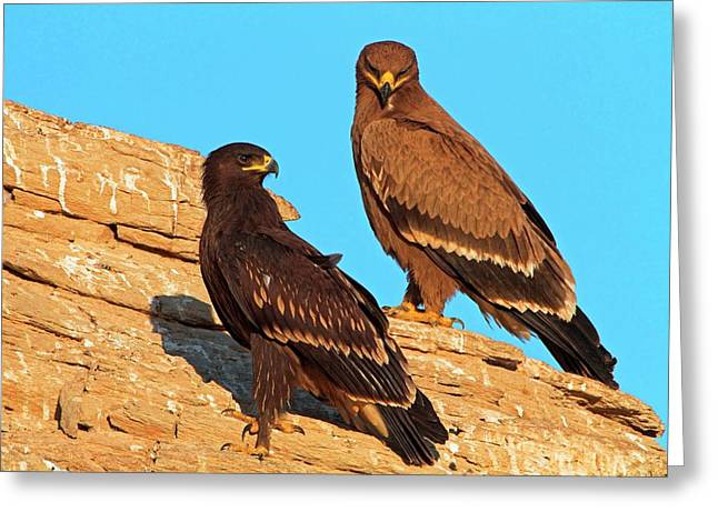 Greater Spotted Eagles Greeting Card by Bildagentur-online/mcphoto-schaef