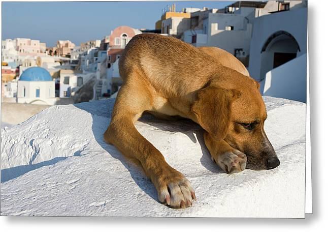 Greece, Santorini, Thira, Oia Greeting Card by Jaynes Gallery