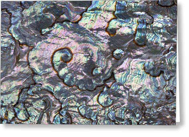 Abalone Greeting Cards - Green Abalone Shell Interior From Baja Greeting Card by Ingo Arndt
