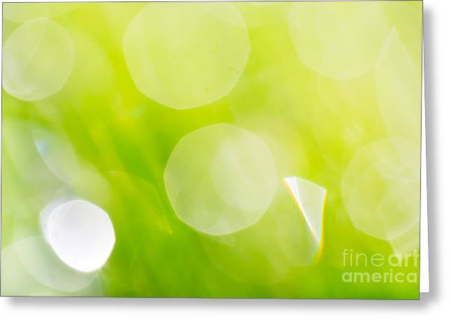 Dewdrops Greeting Cards - Green Abstract - Dewdrops in the Sunlit Grass Greeting Card by Natalie Kinnear