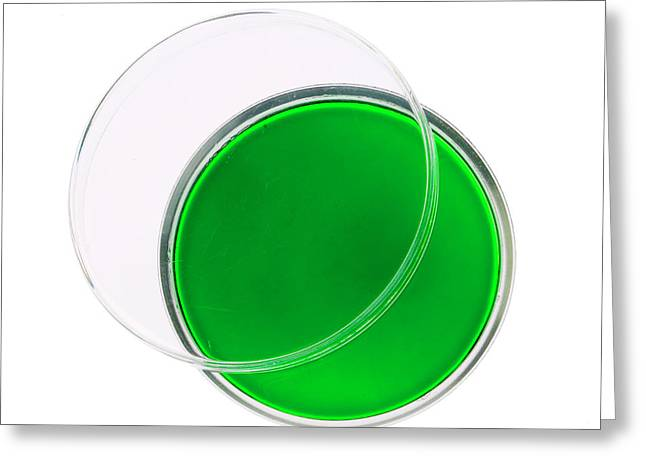 Green Agar Plate Greeting Card by Natural History Museum, London