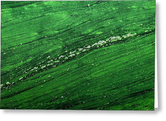 Colored Bubles Greeting Cards - Green algae Greeting Card by Jean Schweitzer