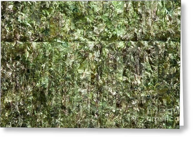 Dried Seaweed Greeting Cards - Green algae nori Greeting Card by Deyan Georgiev