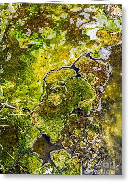Inner Space Greeting Cards - Green algae Greeting Card by Patricia Hofmeester