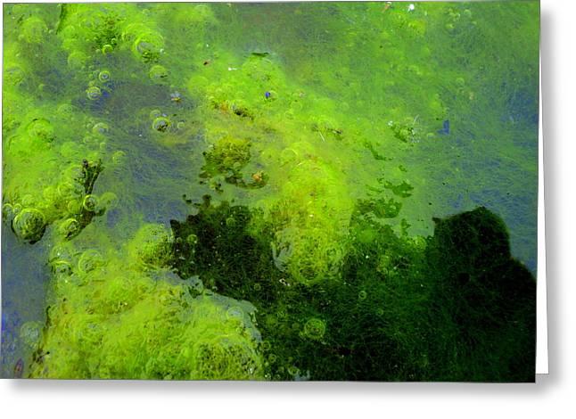 Green Algae Greeting Card by Salman Ravish
