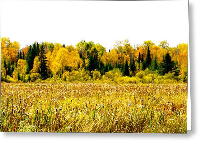 Green And Yellow Greeting Cards - Green amongst the Gold2 Greeting Card by Susan Crossman Buscho