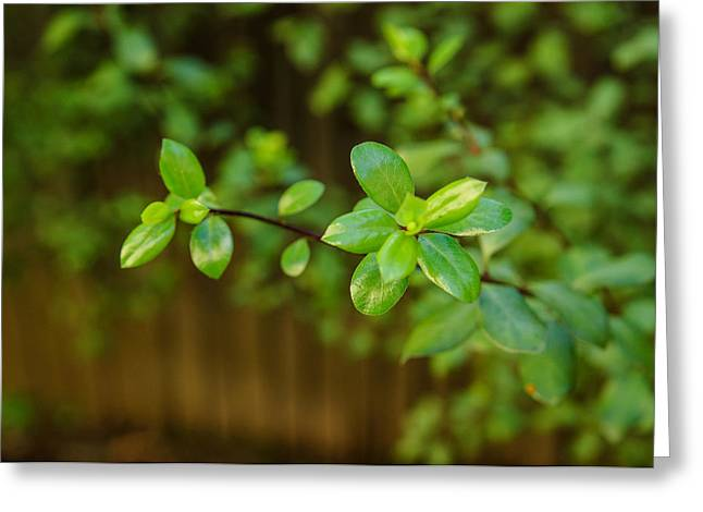 John Kennedy Greeting Cards - Green and Brown Greeting Card by John Kennedy