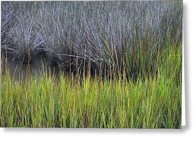 Beach Photograph Greeting Cards - Green and Gray Marsh Grasses on Jekyll Island Greeting Card by Bruce Gourley