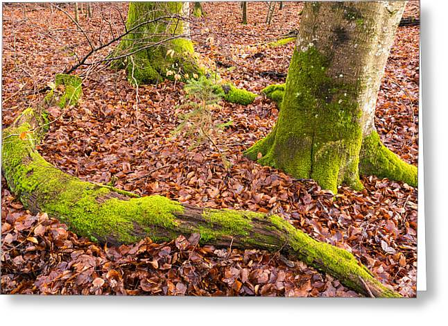 Red And Green Photographs Greeting Cards - Green and red nature in the forest Greeting Card by Matthias Hauser