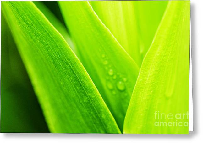Simple Beauty In Colors Greeting Cards - Green and Wet Greeting Card by Thomas R Fletcher