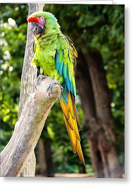 Photos Of Birds Greeting Cards - Green And Yellow Macaw Greeting Card by Chris Flees