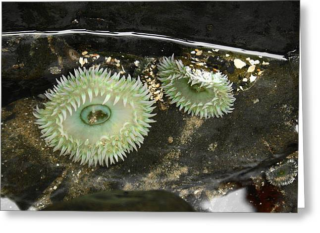Green Anemones Greeting Card by Steven A Bash