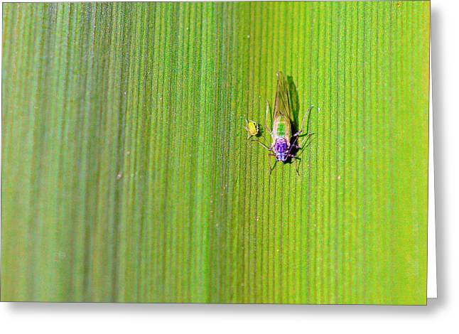 Biological Mixed Media Greeting Cards - Green aphid insect Greeting Card by Toppart Sweden