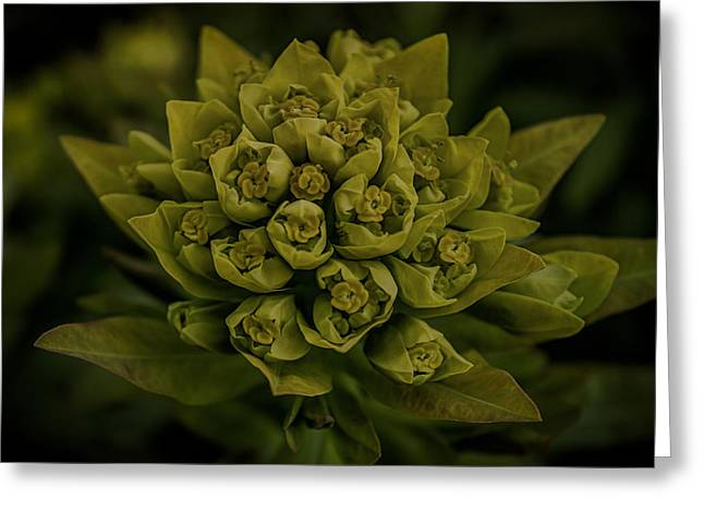 Flower Arranging Greeting Cards - Green Arrangement Greeting Card by Martin Newman