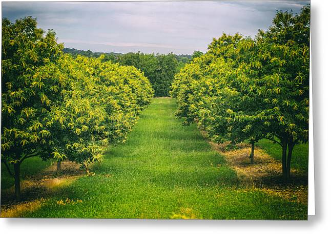 Consumerproduct Greeting Cards - Green Avenue Greeting Card by Nomad Art And  Design