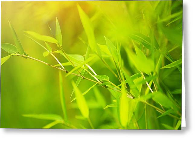 Lush Green Greeting Cards - Green bamboo background Greeting Card by Anna Omelchenko