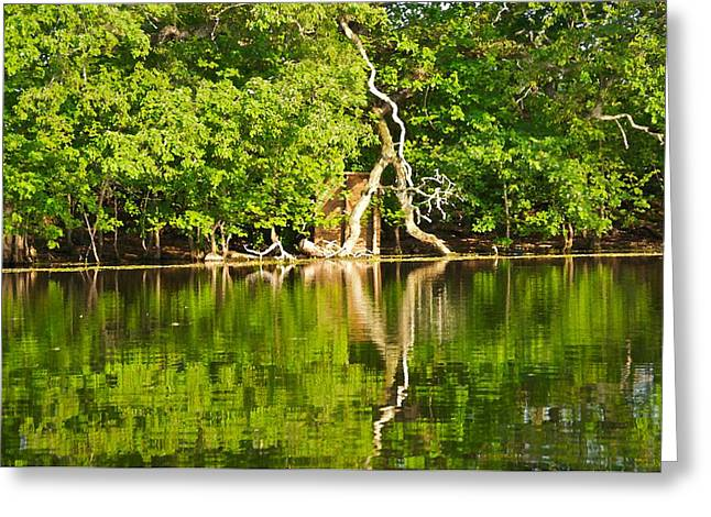 Hunting Cabin Digital Art Greeting Cards - Green Bayou Greeting Card by Catherine Renzini