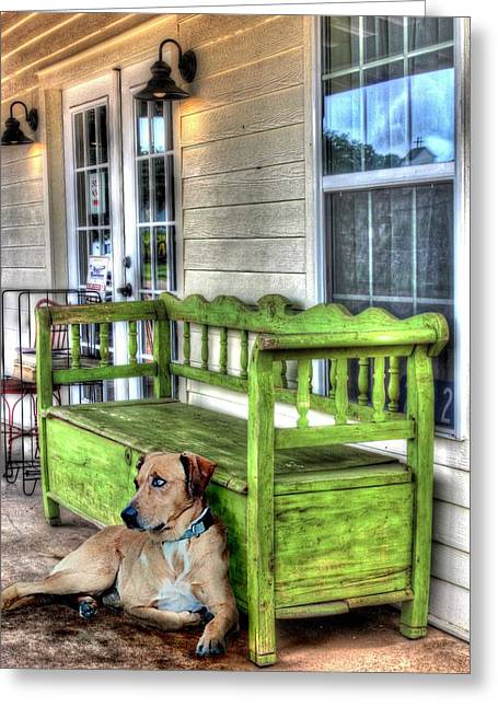 Catahoula Greeting Cards - Green Bench and Catahoula Dog Greeting Card by Delilah Downs