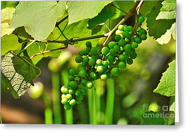 Green Berries Greeting Card by Kaye Menner