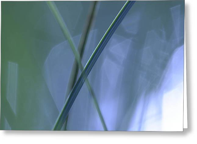 Sensitivity Greeting Cards - Green-blue grasses - available for licensing Greeting Card by Intensivelight