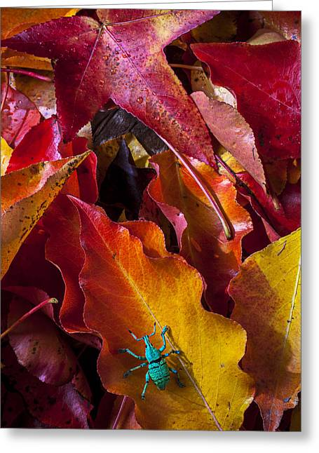 Litter Greeting Cards - Green bug Greeting Card by Garry Gay