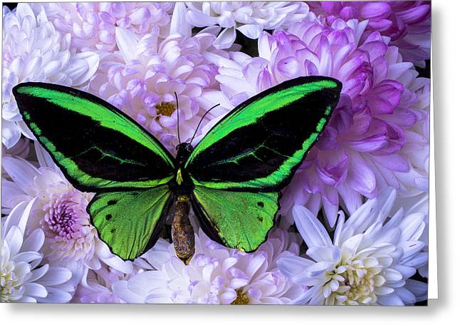 Antenna Greeting Cards - Green butterfly and mums Greeting Card by Garry Gay