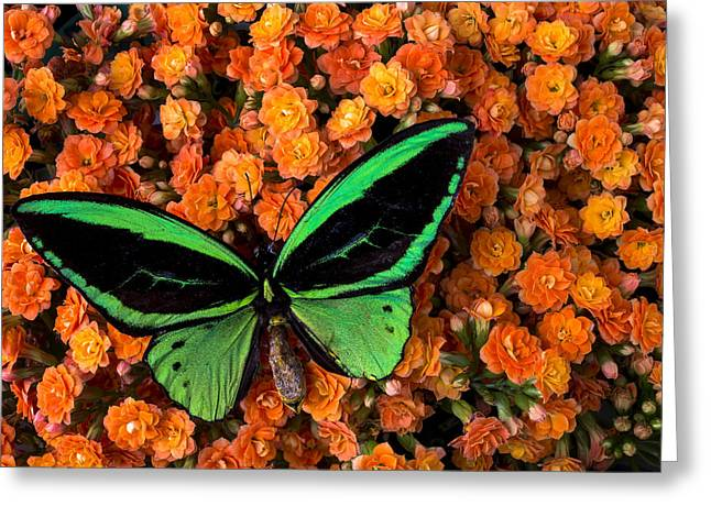 Antenna Greeting Cards - Green Butterfly Greeting Card by Garry Gay