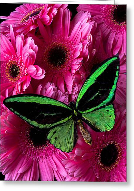 Color Green Greeting Cards - Green Butterfly On Pink Daisy Greeting Card by Garry Gay